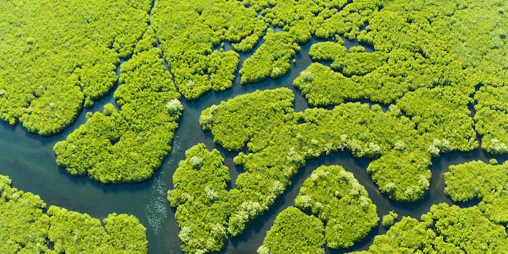 The correlation of urban development and environmental impact – Mangroves Case Study